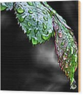 Dripping Wet Wood Print by Karen M Scovill