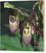 Drippy Lady Slipper Orchids Wood Print