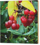 Drips And Berries Wood Print