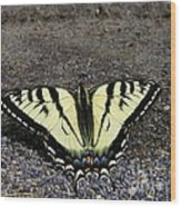 Driveway Butterfly Wood Print