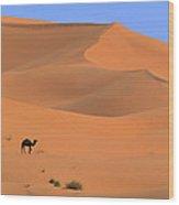 Dromedary Camelus Dromedarius Camel Wood Print