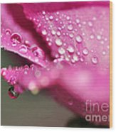 Droplet On Rose Petal Wood Print