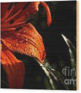 Droplets On Flower Wood Print