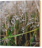 Droplets On Grass Wood Print