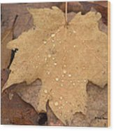 Drops On A Golden Leaf  Wood Print