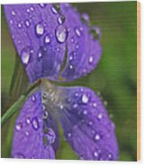 Drops On The Purple Flower Wood Print