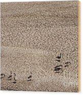 Drought Wood Print