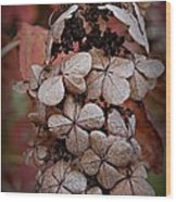 Dry Bloom Wood Print by Beverly Hammond