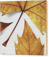 Dry Leafs Wood Print by Carlos Caetano