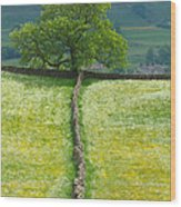 Dry Stone Wall And Lone Tree Wood Print