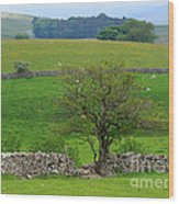 Dry Stone Wall And Twisted Tree Wood Print