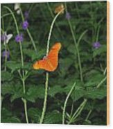 Dryas Iulia  Butterfly Wood Print