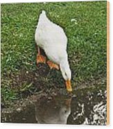 Duck And Refection Wood Print