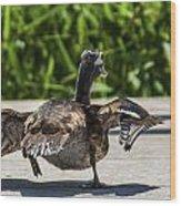 Duck And Run Wood Print