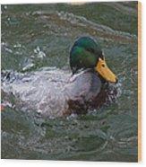 Duck Bathing Series 1 Wood Print