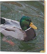 Duck Bathing Series 3 Wood Print by Craig Hosterman