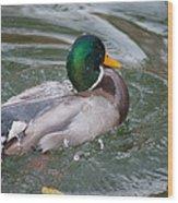 Duck Bathing Series 5 Wood Print