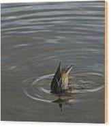 Duck Butt 1560 Wood Print