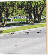 Duck Crossing Wood Print