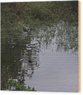 Duck In A Pond Wood Print