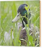 Duck In The Green Grass Wood Print