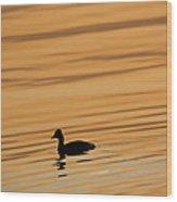 Duck On Golden Water Wood Print