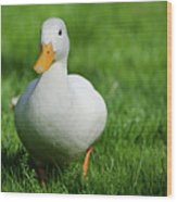 Duck On Grass Wood Print