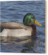 Duck On The Water Wood Print