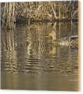 Duck Ripples Wood Print