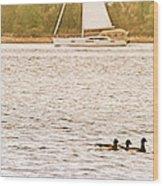 Duck Sailing Wood Print