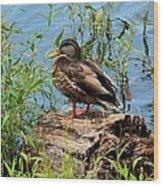 Duck Season Wood Print