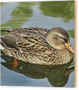 Duck Soup  Wood Print