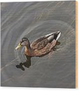 Duck Swimming In Clear Water St Wood Print