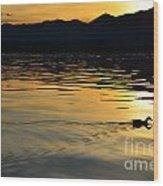 Duck Swimming Wood Print