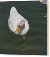 Ducking In Wood Print