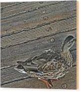 Ducking Wood Print