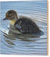 Duckling Pool Wood Print