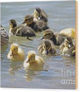 Ducklings 09 Wood Print