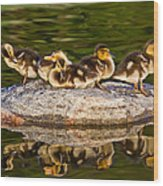 Ducklings Catch Some Rays Wood Print