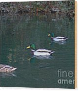 Ducks In A Line  Wood Print by The Kepharts