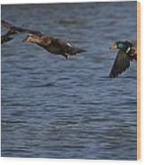 Ducks In Flight 1 Wood Print