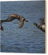 Ducks In Flight 2 Wood Print