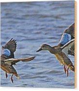 Ducks In Flight Wood Print