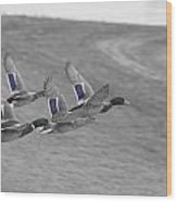 Ducks In Flight V1 Wood Print