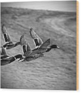 Ducks In Flight V2 Bw Wood Print