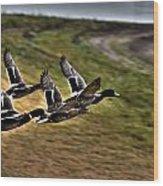 Ducks In Flight V5  Wood Print