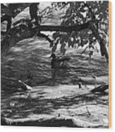 Ducks In The Shade In Black And White Wood Print