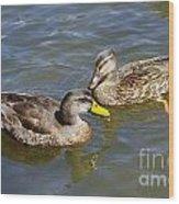 Ducks In The Sun Wood Print