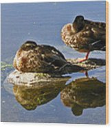 Ducks On A Spring Morning Wood Print