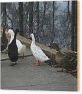 Ducks On A Walk Wood Print